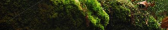 cropped-moss-with-leaves-dec17.png