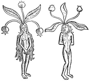 adam and eve mandrakes